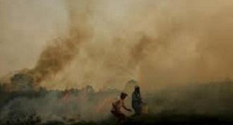 kebakran hutan sumsel
