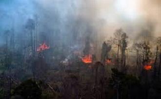 lahan terbakar riau