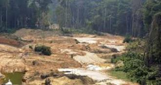 hutan gundul brazil